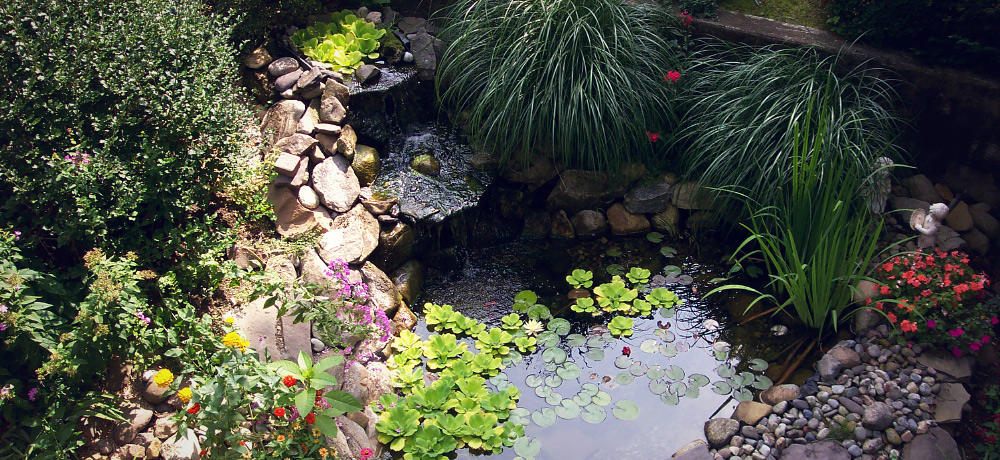 Salt lake city ponds a touch of nature for Salt in koi pond